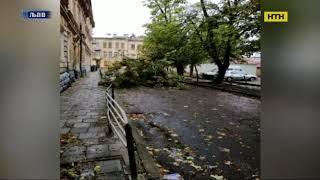 У Львові сильний вітер повалив дерева та пошкодив лінії електромереж