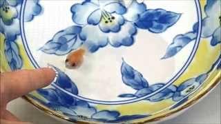 どんぶり金魚~世界でいちばん金魚と仲良くなる方法~