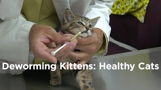 Deworming Kittens: How to have a Healthy Cat