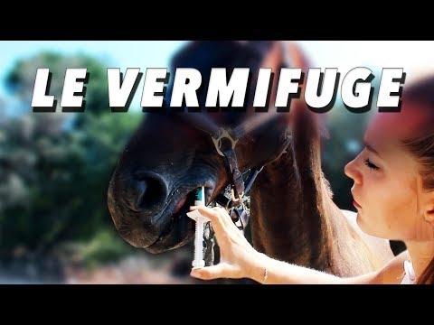 Vitamina d papilloma virus