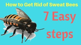 How to Get Rid of Sweat Bees in Yard Without Professional Help Fast & Easy Steps