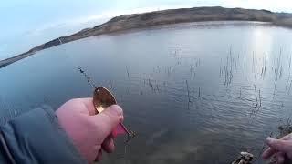 Любительская рыбалка в ставропольском крае 2020
