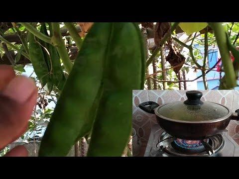 ছাদ বাগানের সবজী দিয়ে আজ কি রান্না করলাম | Rooftop garden vegetable recipe vlog