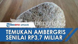 Jalan-jalan di Pantai, Seorang IRT Temukan Muntahan Paus Senilai Rp 3,7 Miliar