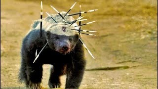Top 15 MOST Aggressive Animals on Earth