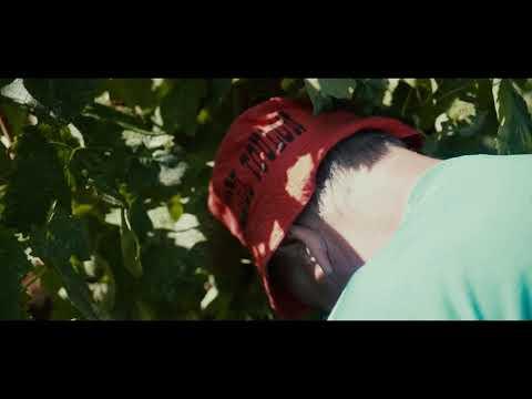 Domaine de la Navicelle  - Teaser  Elliot Film