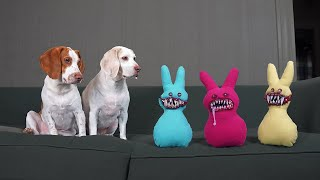Dogs vs Evil Bunnies & Carrot Tornado! Funny Dogs Maymo & Potpie