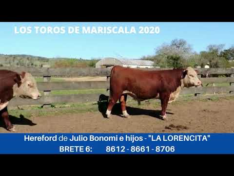 Lote LOTE 6