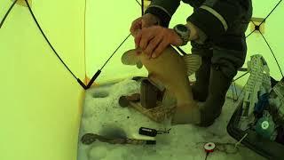 ловля линя со льда