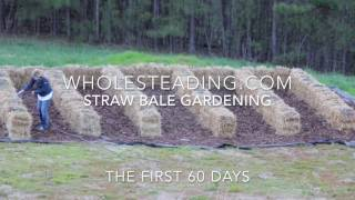 Straw Bale Gardening Time-lapse Video: First 60 Days Of Growth