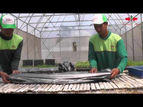 Video Agro TV-PANEN 45 TON DARI OYONG