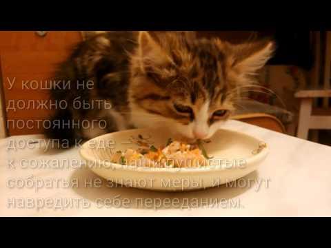 Таблетки от глистов для профилактики у котят
