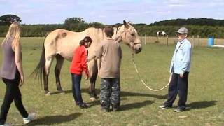 Horses Helping Young People with ADHD