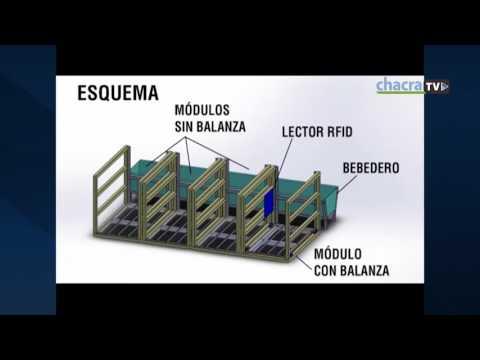 PREMIOS CITA 2017 - Sistema de pesaje