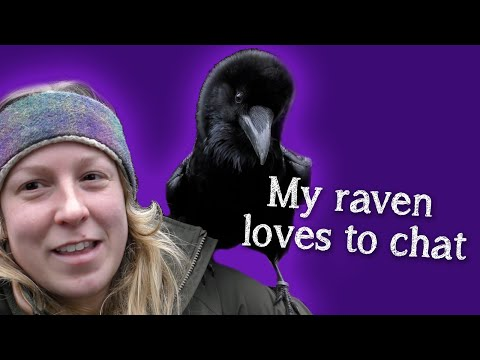 TIL Ravens can talk, just like parrots