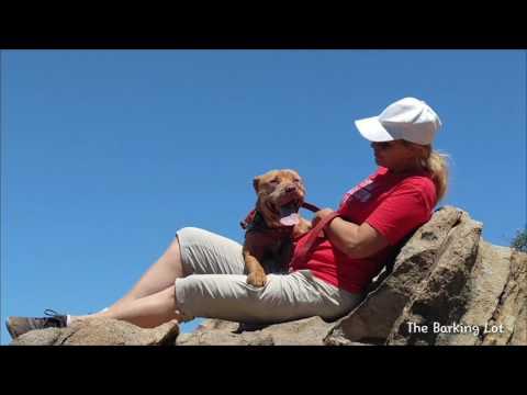 Rayne, an adopted American Staffordshire Terrier & Rhodesian Ridgeback Mix in San Diego, CA