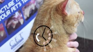 How to Give Insulin Injections to Diabetic Pets