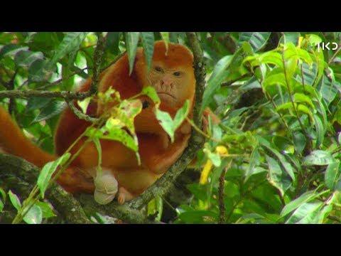 צפו בסיפור מסעו המרתק של הצלם גיל ארבל לג'ונגלים של קוסטה ריקה