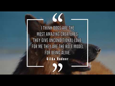 Quotes That Every Dog Lover Can Relate To