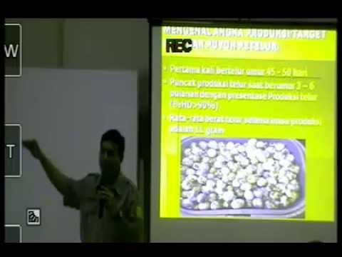 Tingtur bawang putih untuk meningkatkan potensi