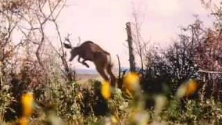 Thunderheart (1992) Video
