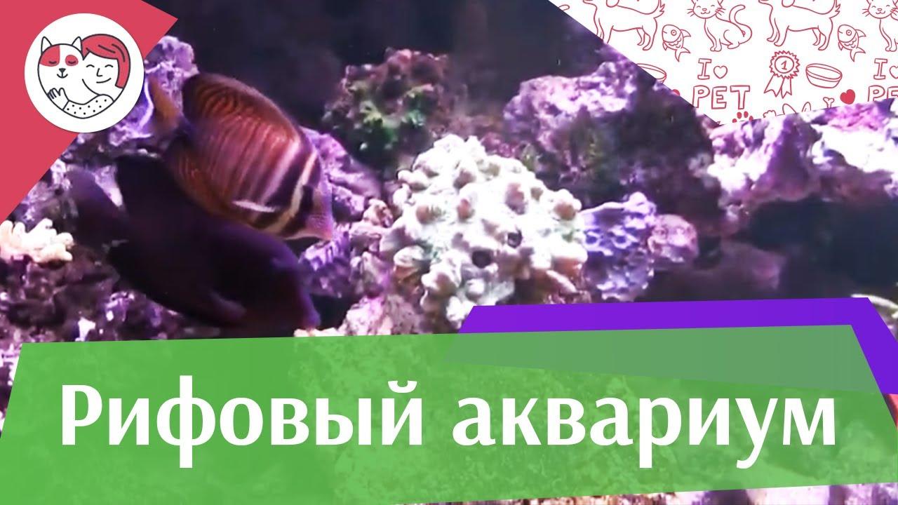 Рифовый аквариум Часть 3 АкваЛого на ilikePet