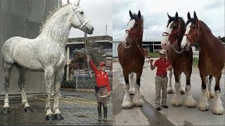 Cute And Funny Horse Videos Compilation Cute Moment Of The Horses Soo Cute! #11