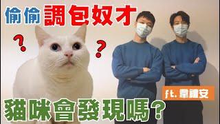 【豆漿 - SoybeanMilk】如果奴才被調包 貓咪會發現嗎? ft.韋禮安