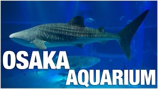 Osaka Aquarium Kaiyukan Tour