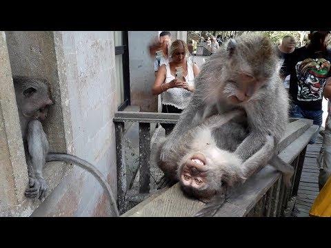 Sacred-Monkey-Forest-Ubud-Bali-Indonesia.html