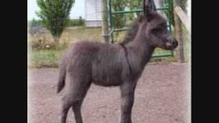 Little Donkey With Lyrics