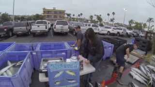 Independence Sportfishing - 7 day - Sept 14-21,2013  Part 6 of 6 - at the Docks unloading