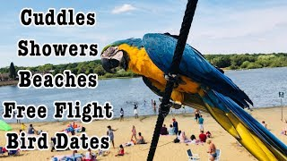 A Day In The Life Of Mikey The Macaw