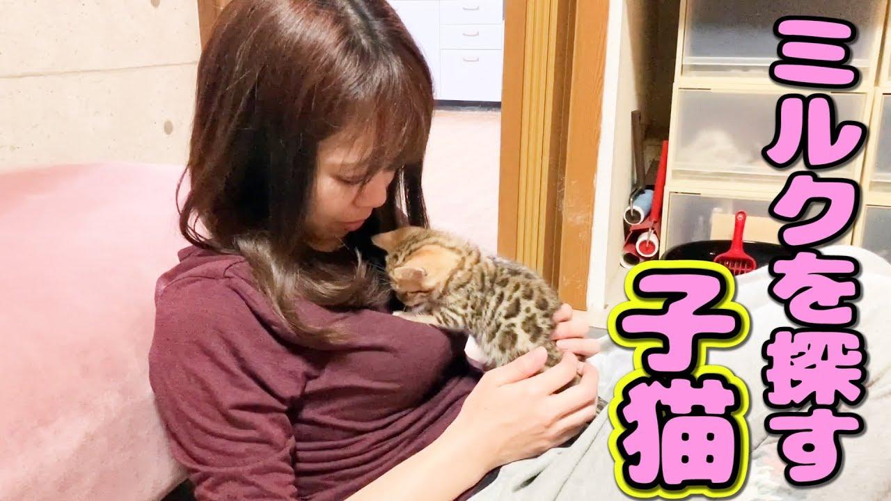 幼い子猫がママにおねだり #猫 #cat #子猫 #ママ #ねた