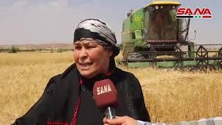 فلاحو دير الزور يبدؤون حصاد محاصيل القمح والشعير.