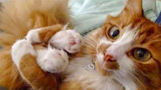 藍 Funniest and Cutest  Cats and Dogs  - Funny Pet Animals' Life
