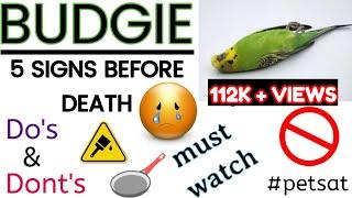 Budgies Sudden Death / Reasons / Symptoms