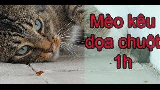 Tiếng Mèo Kêu dọa chuột chạy mất bật lên 30 phút - Bẫy chuột hiệu quả