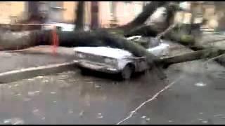 В Одессе шторм, дерево разбило машину