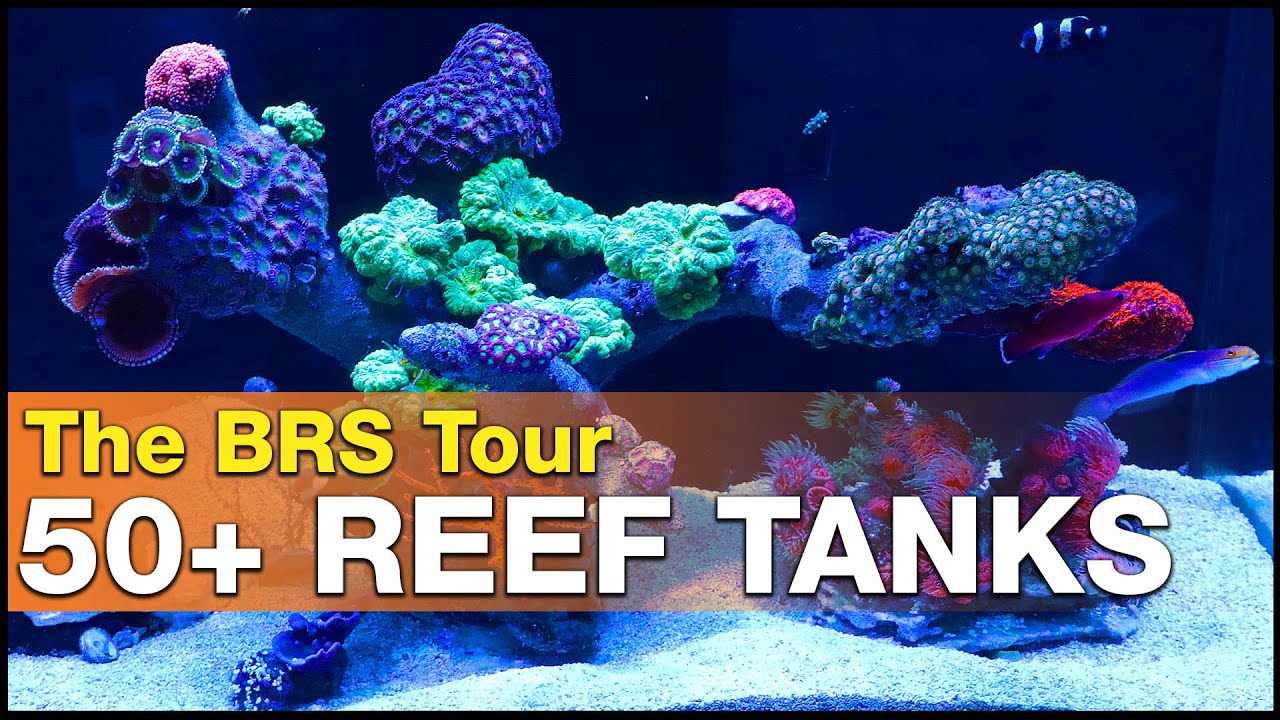 Ep3.2 - OVER 50 saltwater aquariums under one roof! Reef tanks everywhere! | BRS360