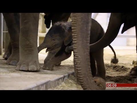 Süßes Elefanten-Baby