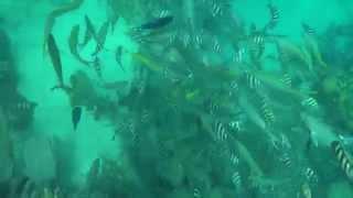 Cayo Arena con los corales