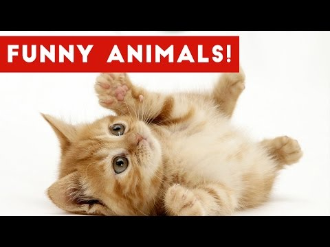 Funny Ultimate Pet & Zoo Animal Fails & Bloopers Weekly Compilation   Funny Pet Videos