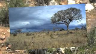 The Savanna Biome in South Africa