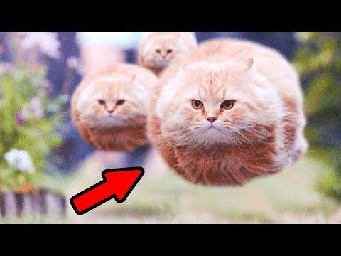 ТЕСТ НА ПСИХИКУ - Приколы с котами