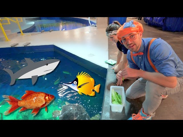 Blippi Visits The Aquarium   Educational Fish and Animals for Kids and Toddlers