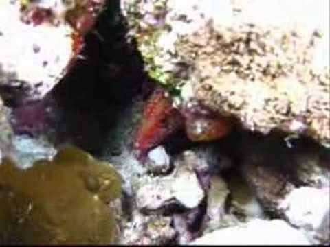 Diving Akassia, Hausriff in Richtung Norden, Nachttauchgang