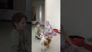 Дети сходят с ума)))) вместе с собаками. В гостях у Лизы, Насти, Антона и собак Гая и Бони