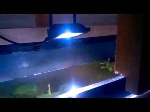 20000k LED Fluter- 10Watt mit blaue LED`s..