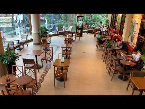 Các mẹo bố trí chậu cây xanh trang trí trong nhà hàng cafe một cách khoa học